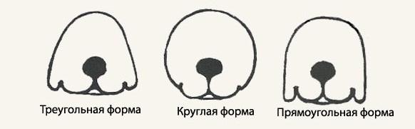 стандарт породы fci акита-ину голова 2